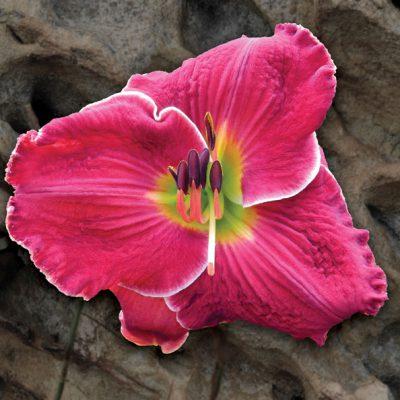 diane-rose-crawford